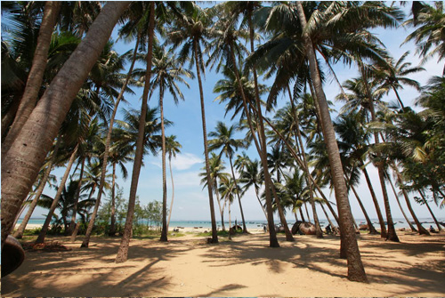 Đảo tam hải du lịch đà nẵng