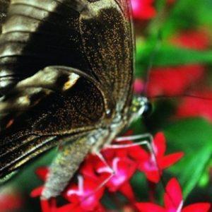 Butterfly Park và Insect Kingdom Sentosa